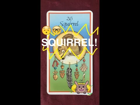 Daily Deity *Squirrel* Animal Totem