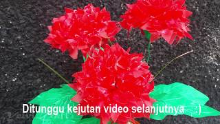 Unduh 770 Gambar Bunga Dahlia Keren Gratis
