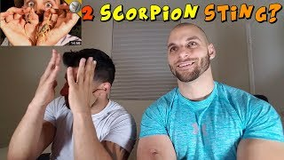 Download Which Scorpion STING is Worse? [REACTION] Video