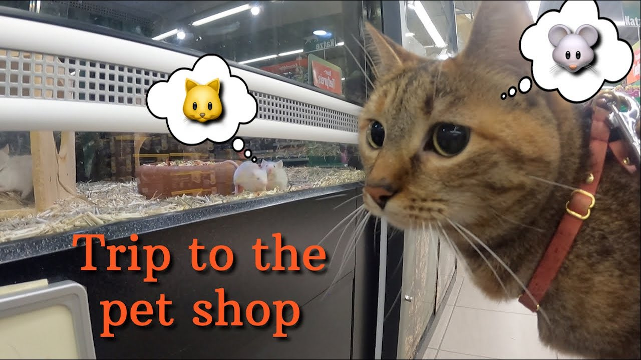 Trip to the pet shop 🐭