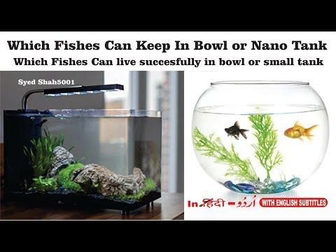 Best Fish For Nano, Micro And Small Aquariums TOP 5 NANO FISH Small Fish Tank
