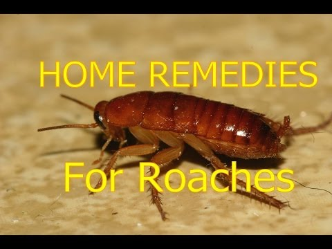 Home Remedies For Roaches In House & Outside Roaches Control