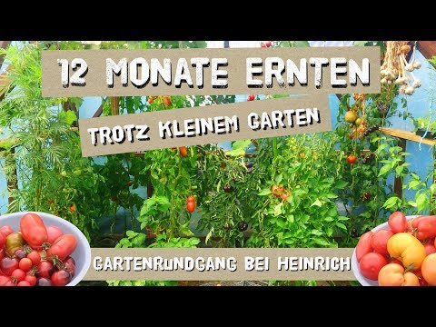 12 Monate ernten, trotz KLEINEM Garten - Gartenrundgang