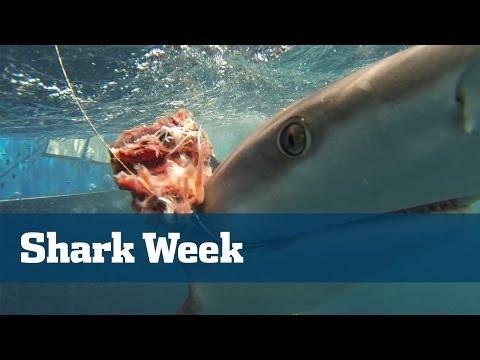 Shark Fishing; How To Catch Big Sharks - Florida Sport Fishing TV