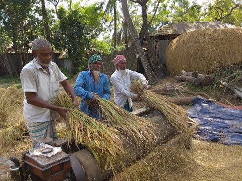 Harvesting Paddy like Primitive Technology style and Paddy processing by village farmers