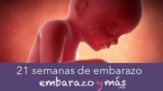 7045aaade 21 semanas de embarazo - Quinto mes - EMBARAZOYMAS