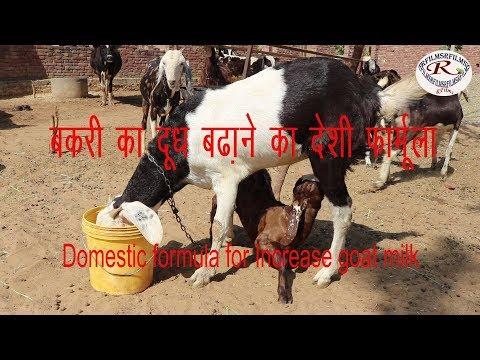 बकरी का दूध बढ़ाने का देसी फार्मूला, Domestic formula for Increase goat milk