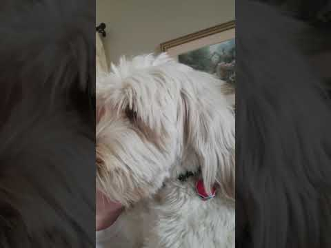 Service Dog Alerting Handler that Alarm is Going Off