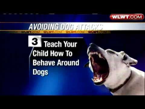Tips To Avoid Dog Attacks