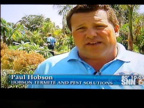 Hobson's (SarasotaPestControl.net) - Caribbean Crazy Ants - SNN Channel 6 News