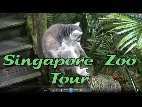 Things to do in Singapore : Singapore zoo, Singapore