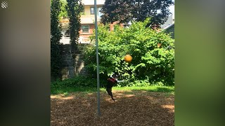Excitable dog cant get enough of swingball