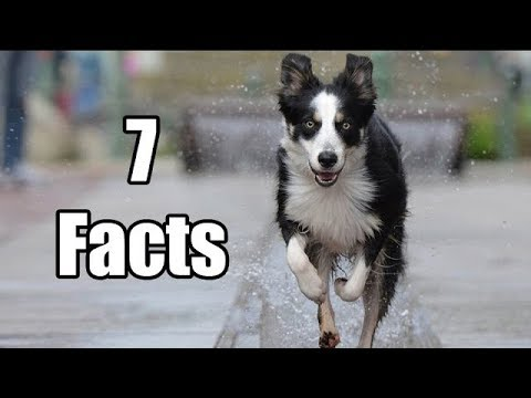 7 Facts about Dogs