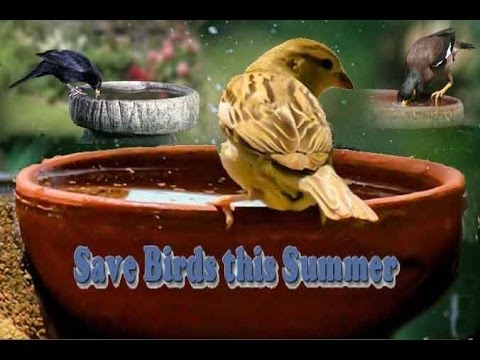 Save Birds This Summer