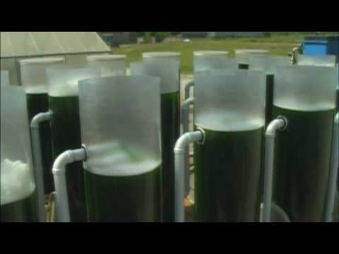 Biofuels from Algae Project - Brunswick Community College Center for Aquaculture & Biotechnology