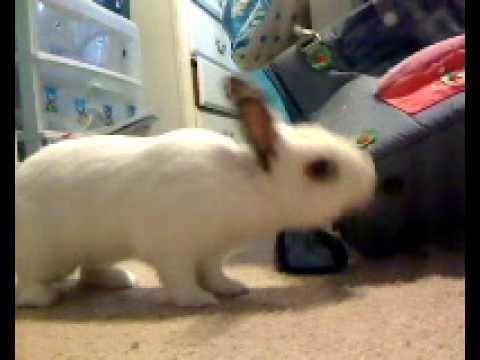 My friends evil bunny