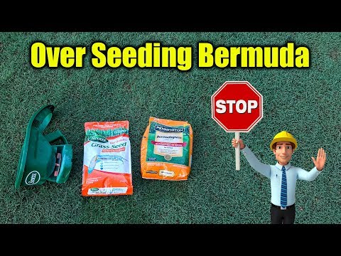 Overseed Bermuda Lawn - Why You Should Not