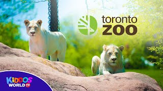 Toronto Zoo 2019 Full Tour - Fun Animals for Children and Toddlers