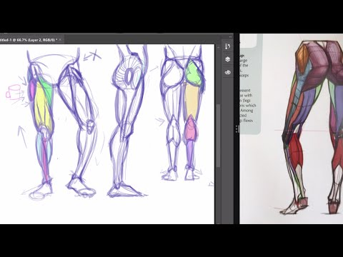 How to draw Legs & Feet