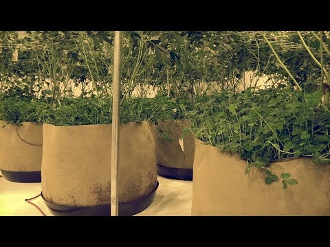 Bringing the Outdoor Notill Method Indoor | Green Life Productions