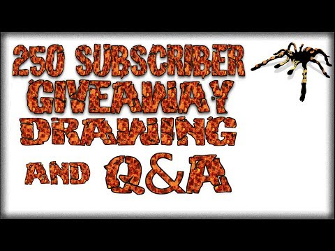 250 Giveaway Drawing and Q&A - Beginners Burrow