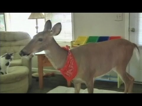 Family Fights to Keep Pet Deer: Michigan Law Prohibits Wild Animals in Homes