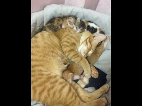 Cat Daddy Wins The Internet Today By Refusing To Leave Pregnant Mom's Side