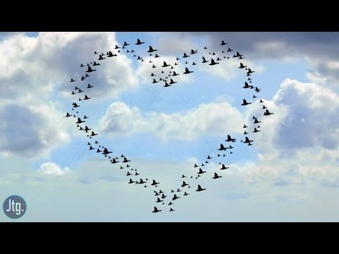 How to create a Heart Shaped Flock of Birds in Photoshop CC Tutorial