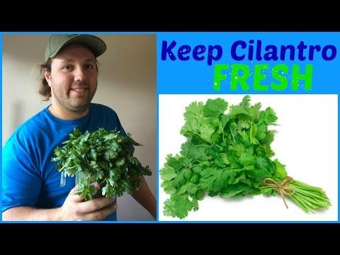 How to keep Cilantro FRESH ✅