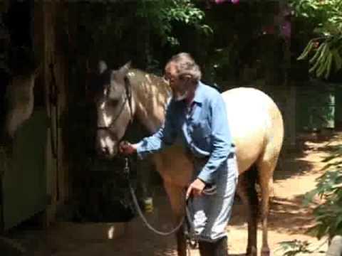 teaching a horse head down