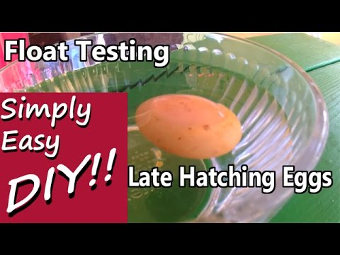 Late Overdue Hatching: Float Testing Egg Viability