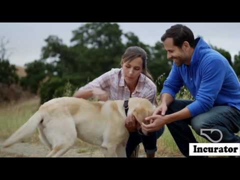 Whistle GPS Pet Tracker, app sounds chip meaning paw | Incurator