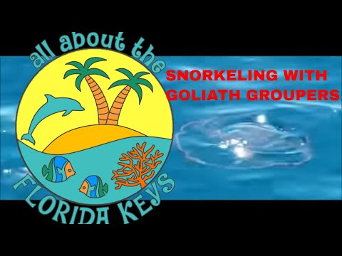 Snorkeling Looe Key Reef after Irma; Goliath Groupers; Picnic Island & Little Palm Island after Irma