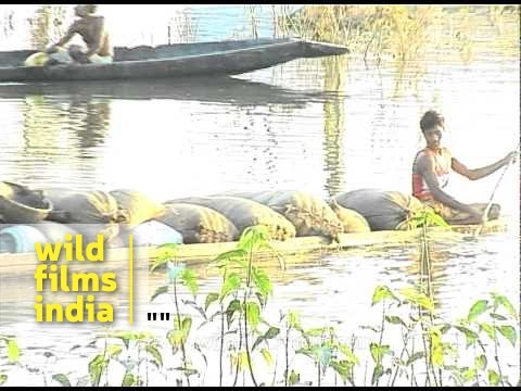 Flood situation in Assam continues to be grim