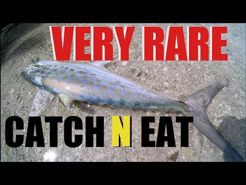 Spanish Mackerel Catch And Eat Extremely Rare