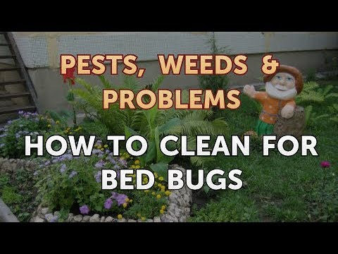 How to Clean for Bed Bugs