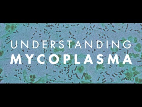 What the heck are they spraying on us? Mycoplasma Explained.. Part 1
