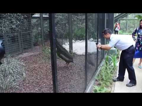 Wings of Asia Aviary Launch