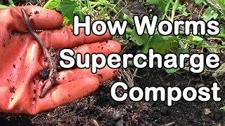 How Worms Supercharge Compost for Healthier Plants and Greater Yields