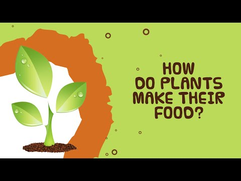 Photosynthesis | How Do Plants Make Their Food |  Facts About Plants