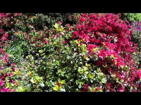Trebah Gardens 30th April 2018