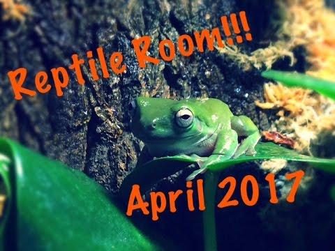 April Reptile Room Tour + Updates!