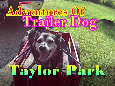 The Adventures Of Trailer Dog!  A Rearward Perspective Of Taylor Park