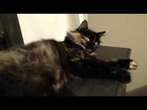 Cat Pregnant Katniss