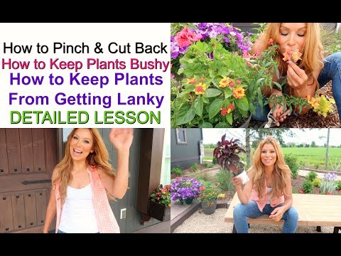 How to Pinch & Cut Back | How to Keep Plants Bushy | How to Keep Plants from Getting Lanky