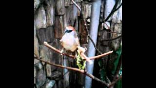 Burung kaso kaso (Nicky) lagi gemes hee.. Nicholas OMC Olympus Magic Community
