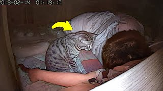 Guy Suspected His Cat and Installed a Camera. Here's What He Saw...