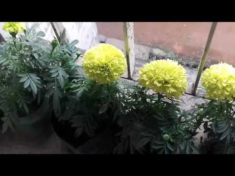 How to grow plant in ABSENCE OF SUNLIGHT (Hindi)