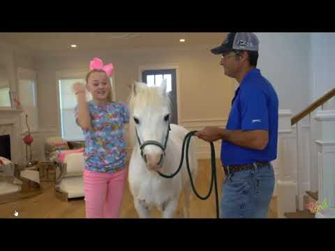 Pink Horse Knowledge - It's the New Standard In The Horse World