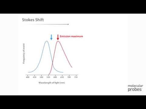Molecular Probes Tutorial Series— Anatomy of Fluorescence Spectra